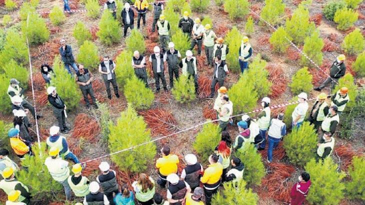 Aydın'da orman yetiştirme tatbikatı