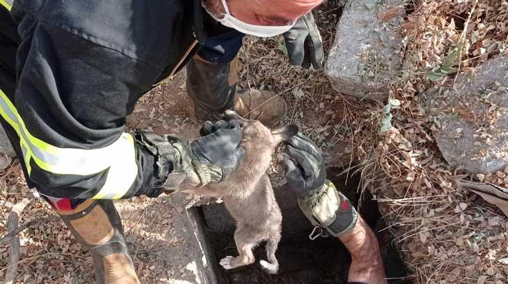 Foseptik çukuruna düşen köpek yavrusu kurtarıldı