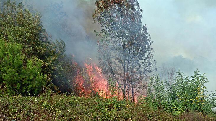 Samsun'da orman yangını! 4 noktadan müdahale edildi