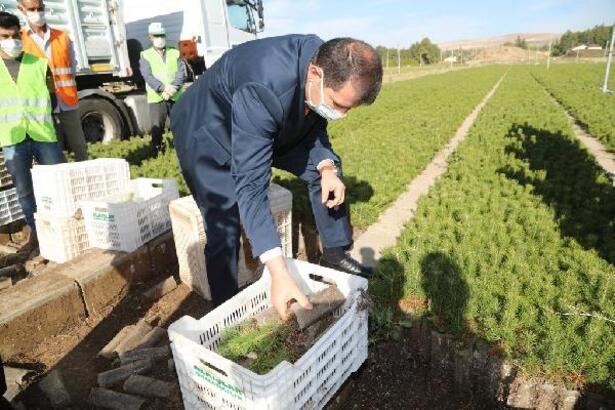 Sivas'ta 1 milyon fidan toprakla buluşacak