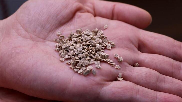 Orman bitkisi tohumlukları piyasasında düzenleme