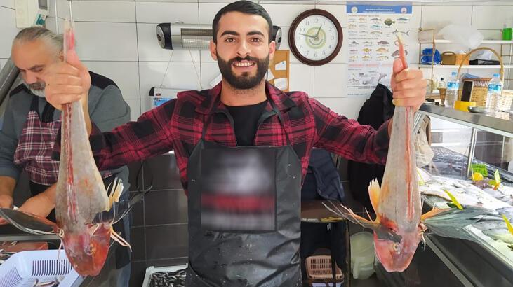 5'er kiloluk kırlangıç balıkları 500 liradan satılıyor