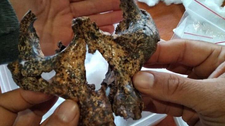 2 milyon yıllık insansı kafatası bulundu