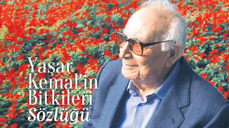 Yaşar Kemal'in bitkileri sözlük olma yolunda