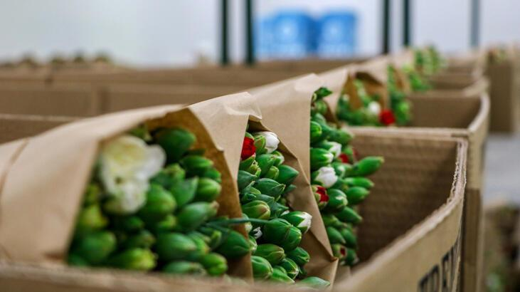 150 milyon dal Noel çiçeği çöpe gidebilir