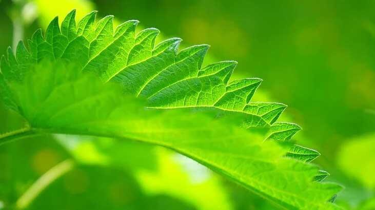 Bitki Koruma Bölümü Nedir, Dersleri Nelerdir? Mezunu Ne İş Yapar?