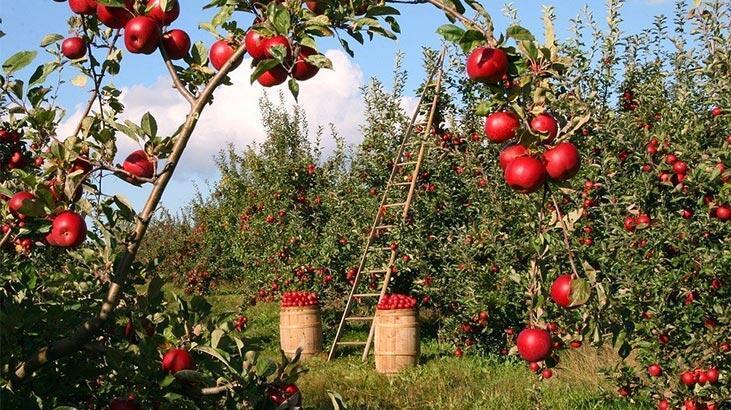 Elma Sirkesinin Faydaları Nelerdir? Saça, Cilde Ve Sivilceye İyi Gelir Mi?