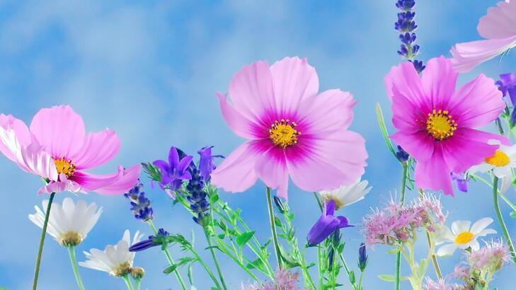 Rüyada Çiçek Toplamak Nedir? Bahçeden Beyaz, Sarı, Mor Renkli Rengarenk Çiçekler Toplamak