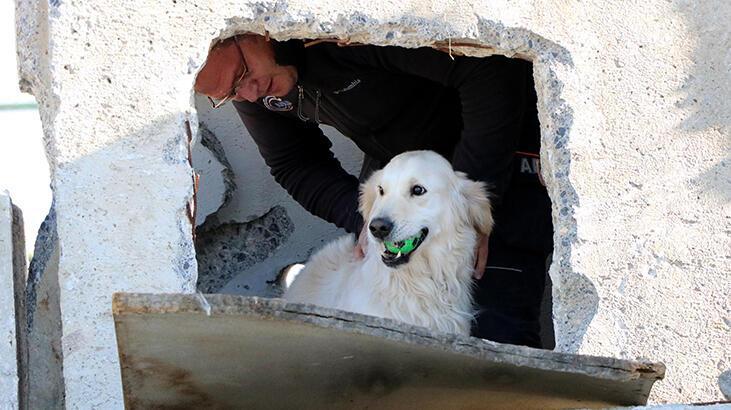 Hassas burun 'Poyraz', bir yılda 4 kişiyi kurtardı