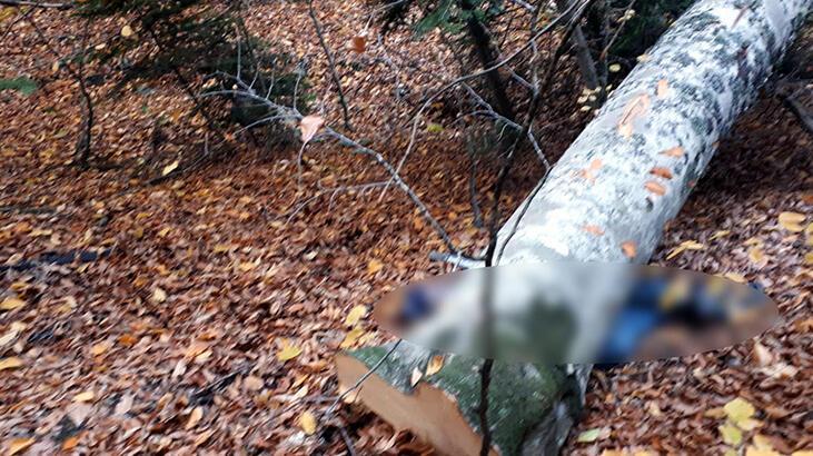 Kestiği ağacın altında kalan orman işçisi, öldü