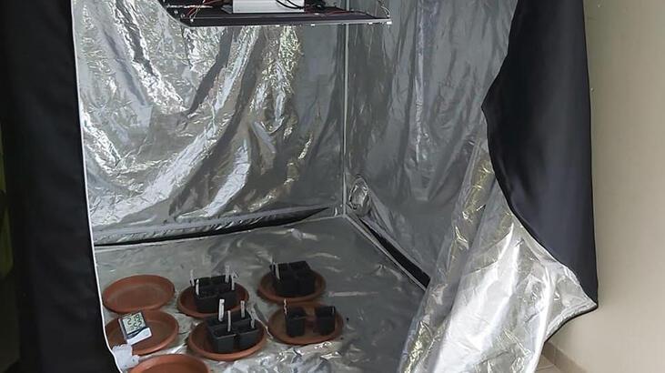 Çadırda uyuşturucu yetiştiren şüpheliye gözaltı