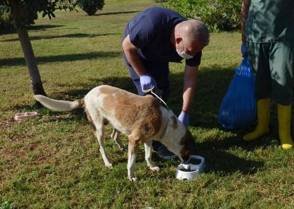 Kepez Belediyesi, sokak hayvanları için mama üretti