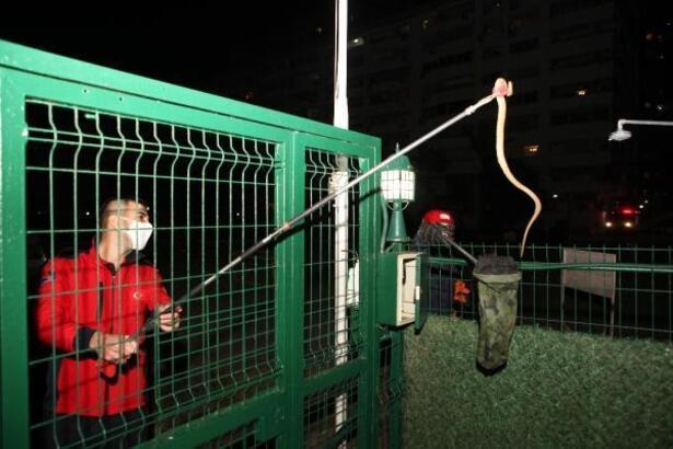 Mersin'de yılan operasyonu