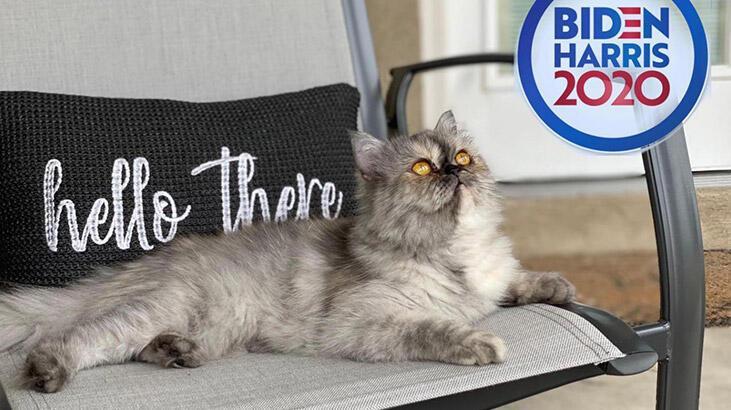 """Beyaz Saray'a """"first kedi"""" geliyor"""