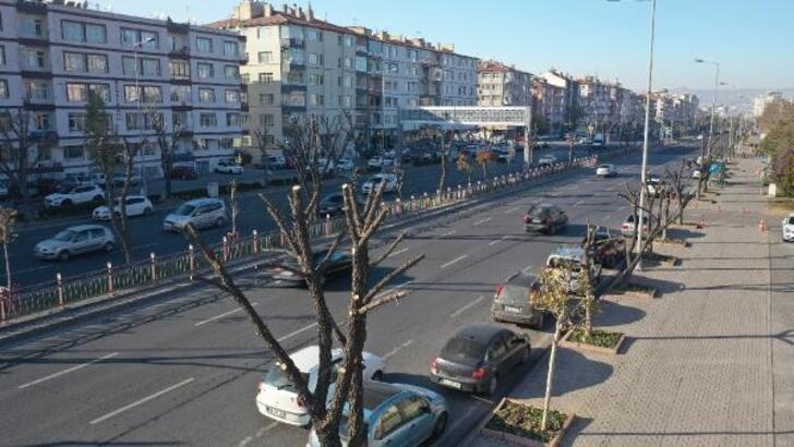Büyükşehir'den ağaçlara kış bakımı