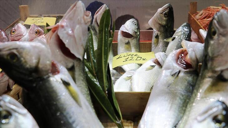 'Denizlerin prensi' lüfer bollaşınca tezgahta fiyatı düşüşe geçti