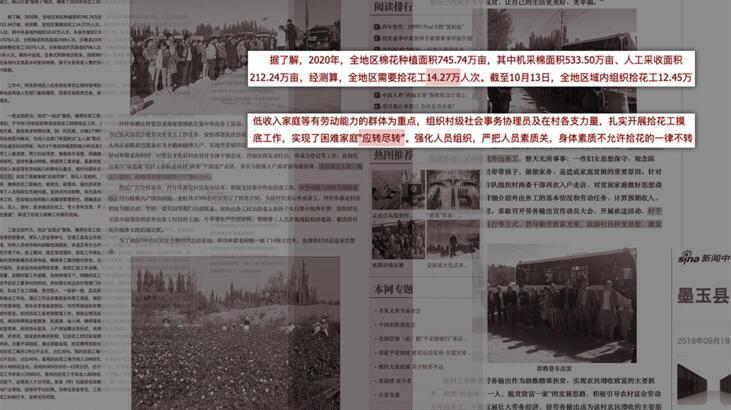 BBC: Çin yüz binlerce Uygur Türkü'nü pamuk tarlalarında çalışmaya zorladı
