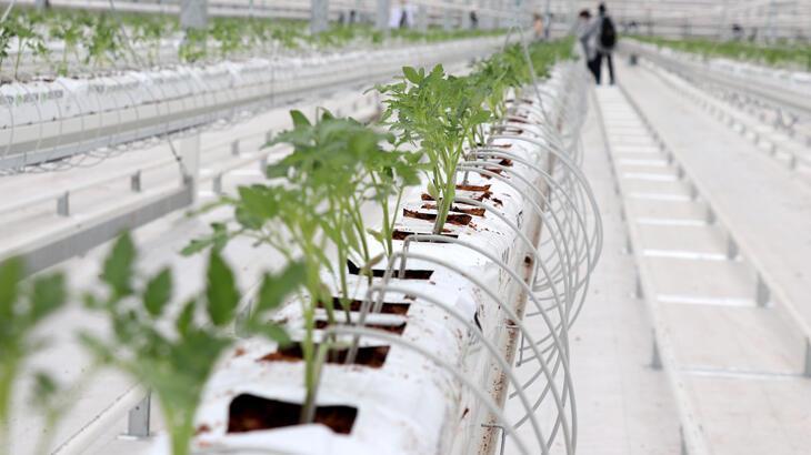 Sivas'ta 60 dönüme kurulan jeotermal serada sebze yetiştirilecek