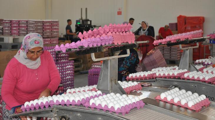 Yumurta, tavuk fiyatlarını geçti