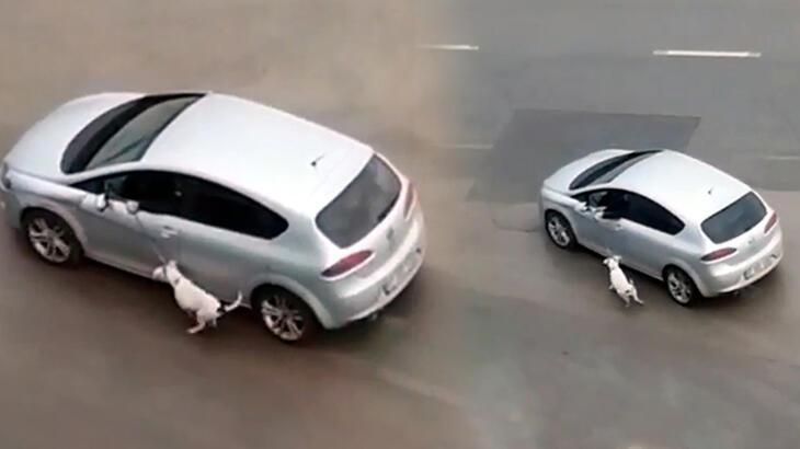 Araçla köpeğini tasmasından sürükledi! 'Eğitim gereği' dedi