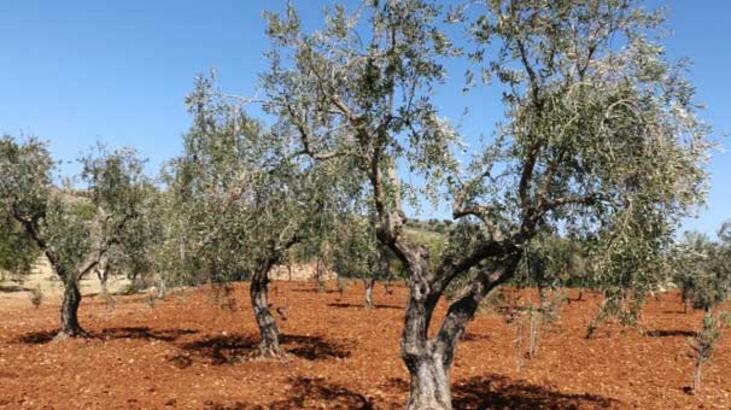 Kırşehir'de orman köylülerine 2 yılda 1 milyon 400 bin lira destek sağlandı