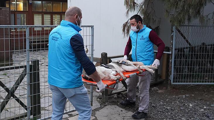 Başakşehir'de magandalar sokak köpeğini vurdu
