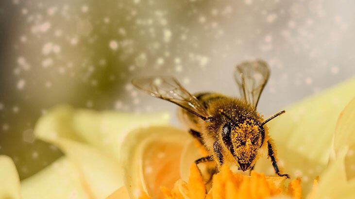 Arıdan Kaçmak