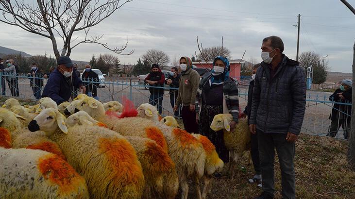 Aksaray'da koyunları telef olan aileye Valilik 33 koyun hediye etti