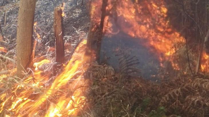 Son dakika... Trabzon'da örtü yangını! Müdahale devam ediyor