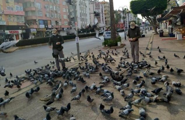 Polis, sokak hayvanlarını besledi