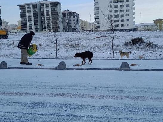 Kar ve kısıtlamada sokak hayvanları unutulmadı