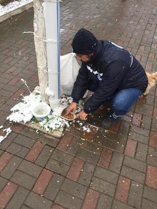 Biga Belediyesi soğuk havalarda sokak hayvanlarını unutmadı