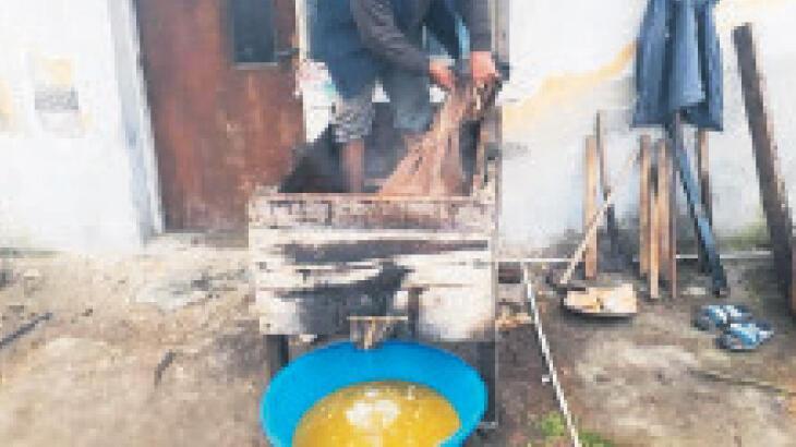 Ayak Yağı yöntemiyle zeytinyağı üretiyorlar