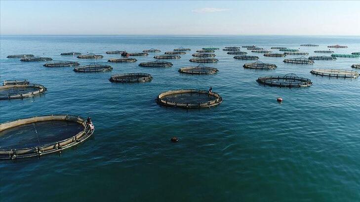 Akdeniz'den 115 ülkeye su ürünleri ihraç edildi