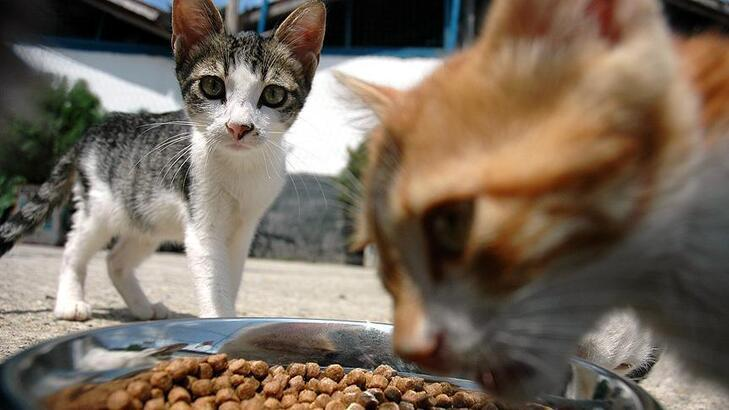 Kedi ve köpek maması alınacak