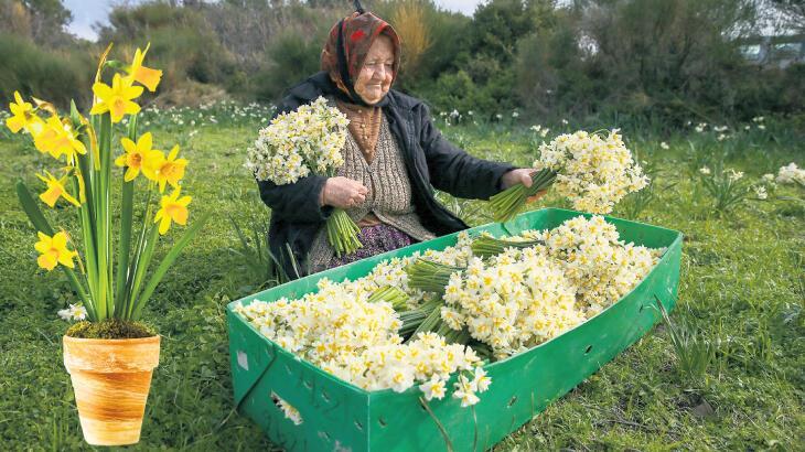 Kışa baharı getiren çiçek