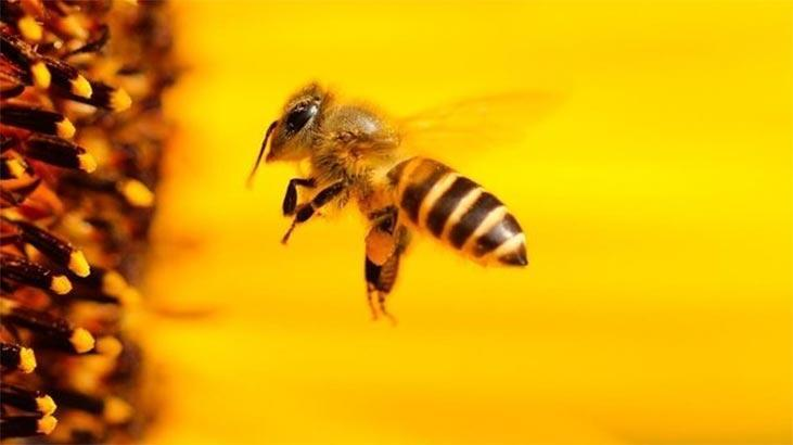 Arıları öldüren ilaca 'uzatma'