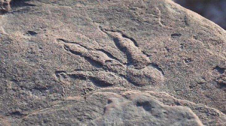 4 yaşındaki çocuk plajda 220 milyon yıllık dinozor ayak izi buldu