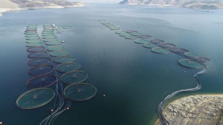Elazığ'dan 98 milyon liralık alabalık ihracatı