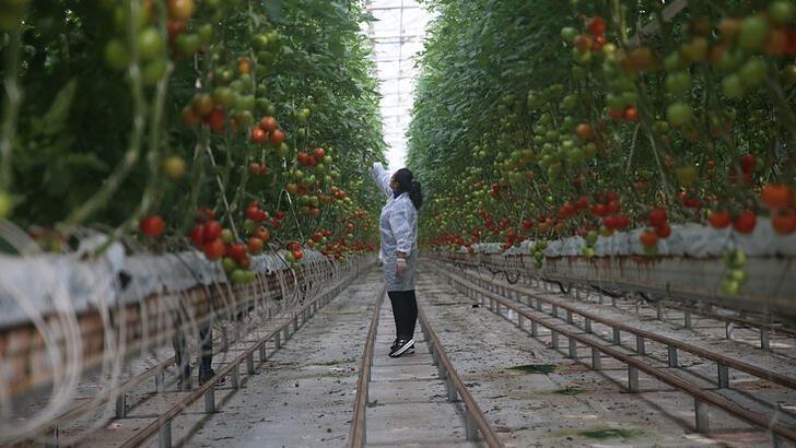Gıda fiyatlarındaki dalgalanmaya karşı seracılık desteklenecek