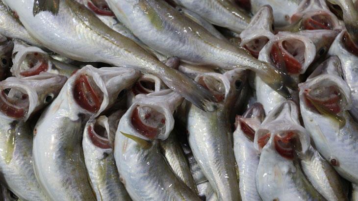 Kısıtlamada tezgahları farklı balıklar süsledi