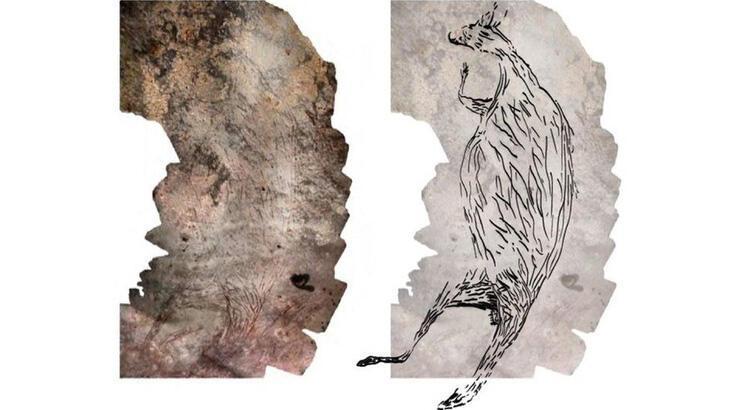 Avustralya'da 17 bin 300 yıllık kanguru çizimi bulundu