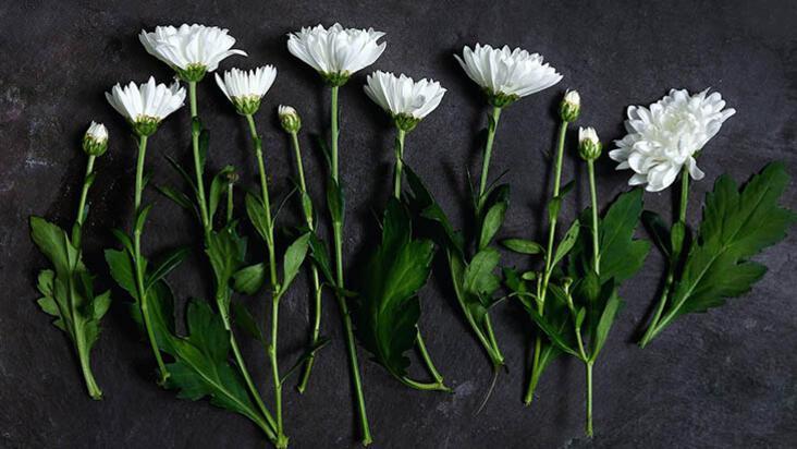 Kurutulmuş yapraklardan tablo yapımı