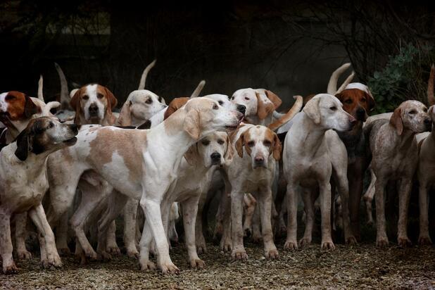 Köpek Cinsleri ve Özellikleri: Köpek Türleri ve İsimleri Nelerdir?