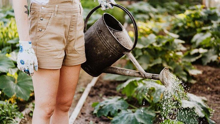 Bahçe için pratik bilgiler