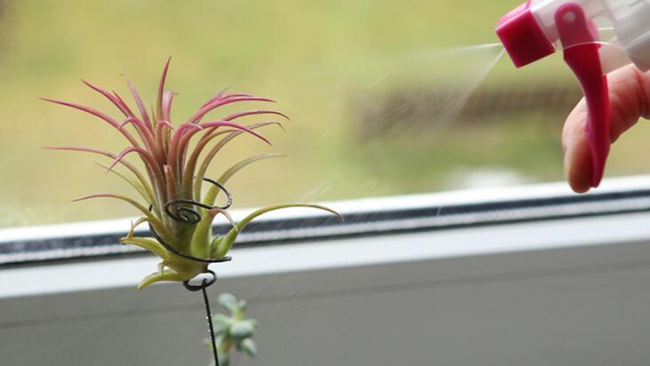 Neredeyse kendi kendine büyüyebilen bakımı kolay 12 ev bitkisi