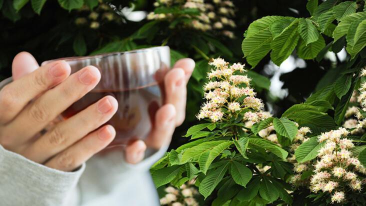 Balından daha  faydalı çıktı! Kestane çiçeği çayı antioksidan deposuymuş...