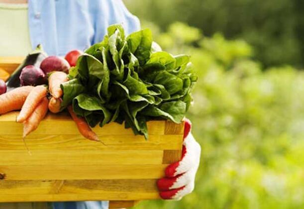 -Organik gıdalar daha fazla besin sunar