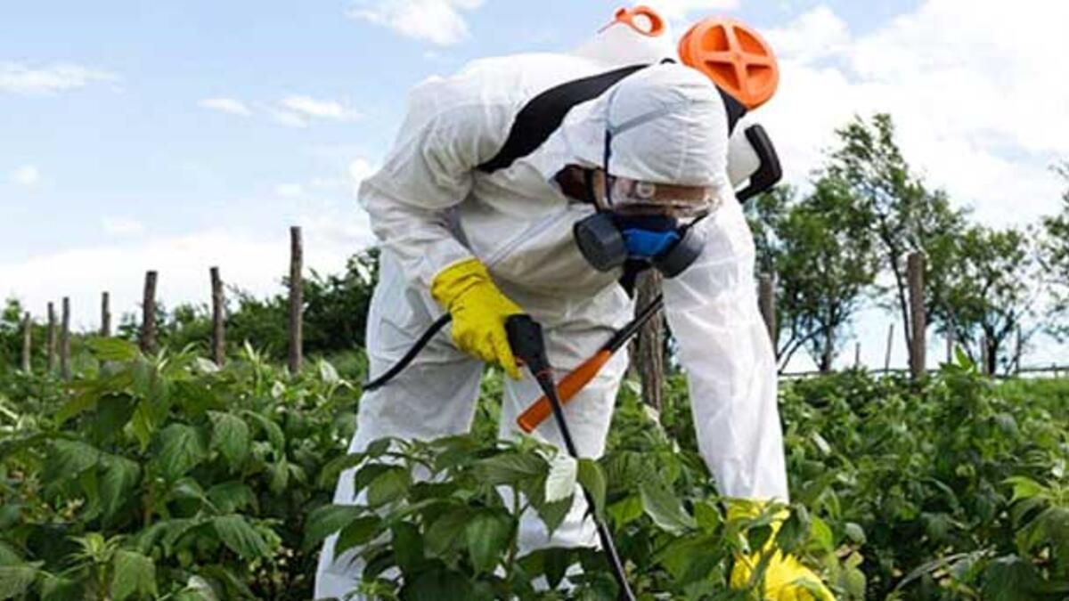 Pestisit nedir ve zararları nelerdir? - Güncel Haberler Milliyet