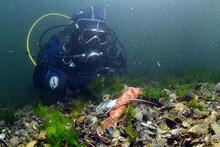 İzmit Körfezi'nde suyun altı balık ve diğer canlı ölüleriyle dolu